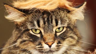 Warum kommt mir diese Katze nur so bekannt vor?