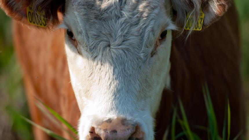 Auf welchen Webseiten würden sich eigentlich Kühe rum treiben?