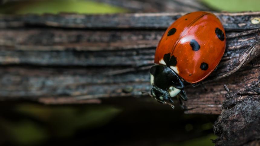 Da werden Bugs einfach zu Features erklärt. Auch diese Woche ist wieder einiges passiert.