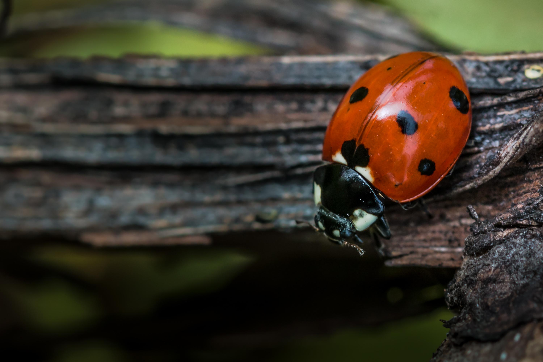Da werden Bugs einfach zu Features erklärt: Auch diese Woche ist wieder einiges passiert.