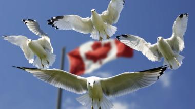 Freiheit oder Sicherheit? Kanada will das mit einer Befragung klären.