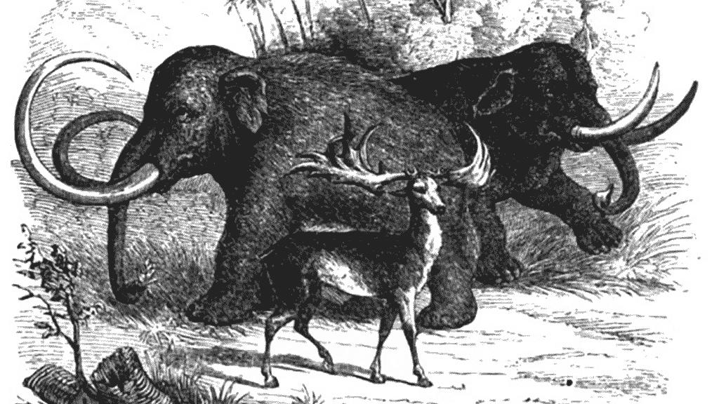 GNU social – netzpolitik org