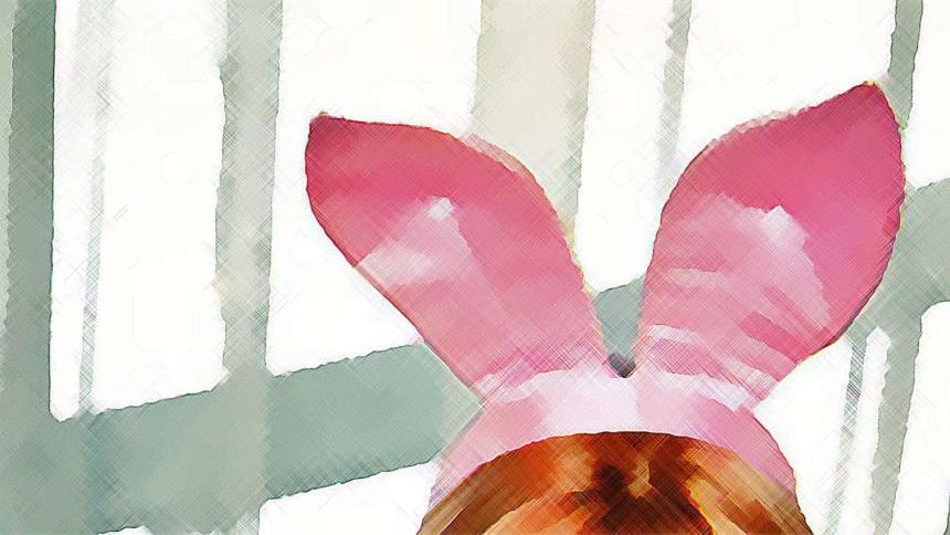 Playboy verklagt Boing Boing – wegen Links