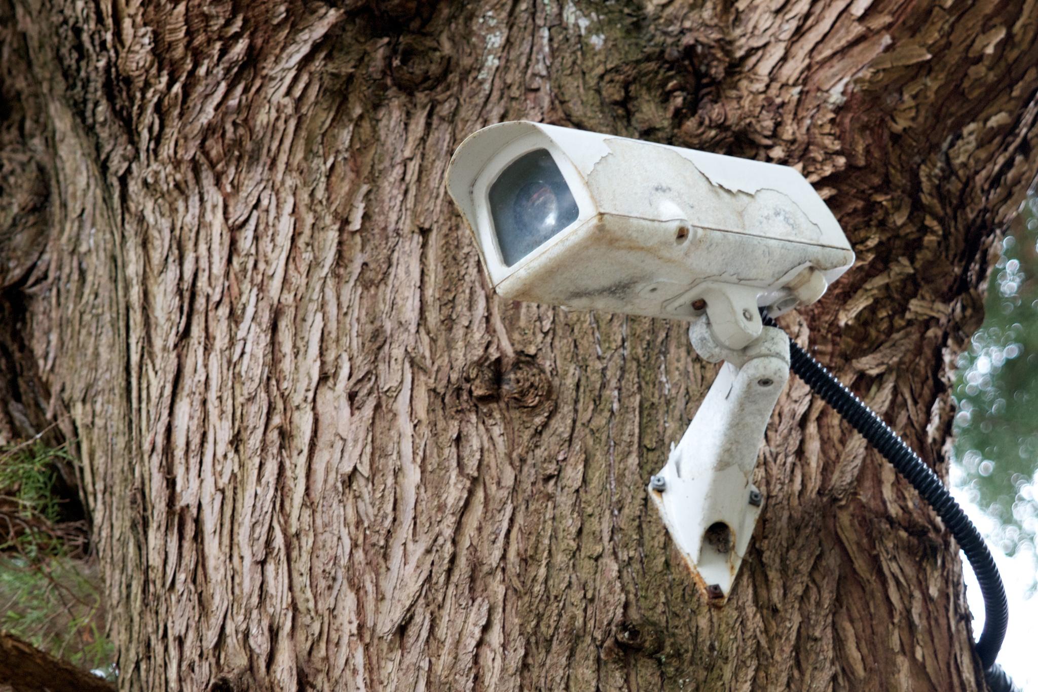 UN-Weltklimakonferenz: Polen will Umweltschützer überwachen ...