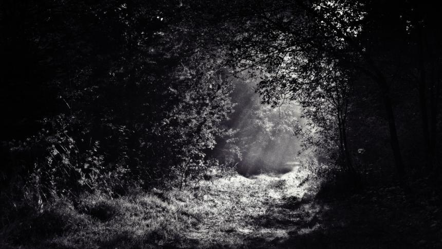 Wald schwarzweiß Licht Schatten