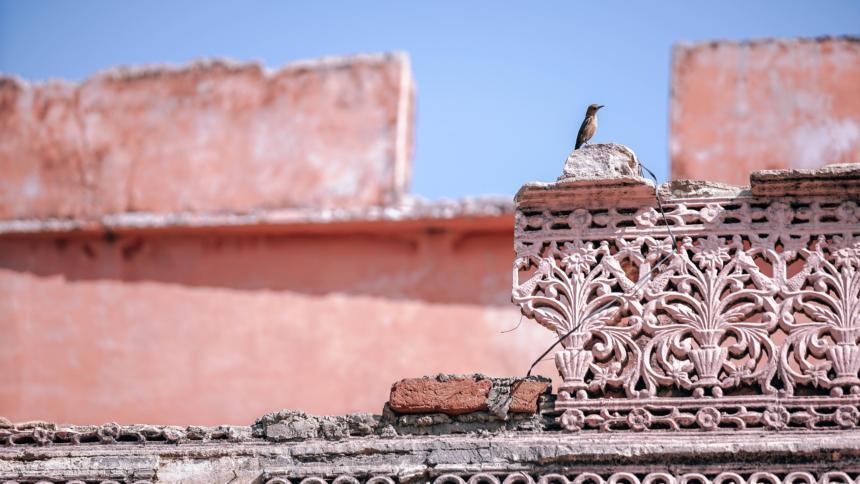Vogel sitzt auf einer kaputten Steinmauer