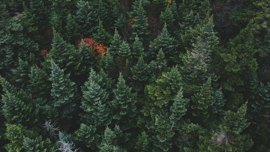 Wald mit Nadelbäumen, Aufnahme aus einer Drohne