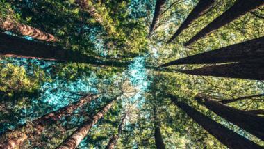 Ein Wald von unten gen Himmel