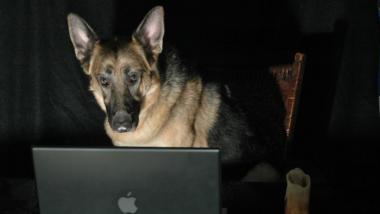 Schäferhund vor einem Laptop