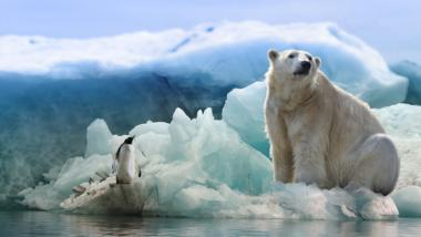 Eisbär und Pinguin