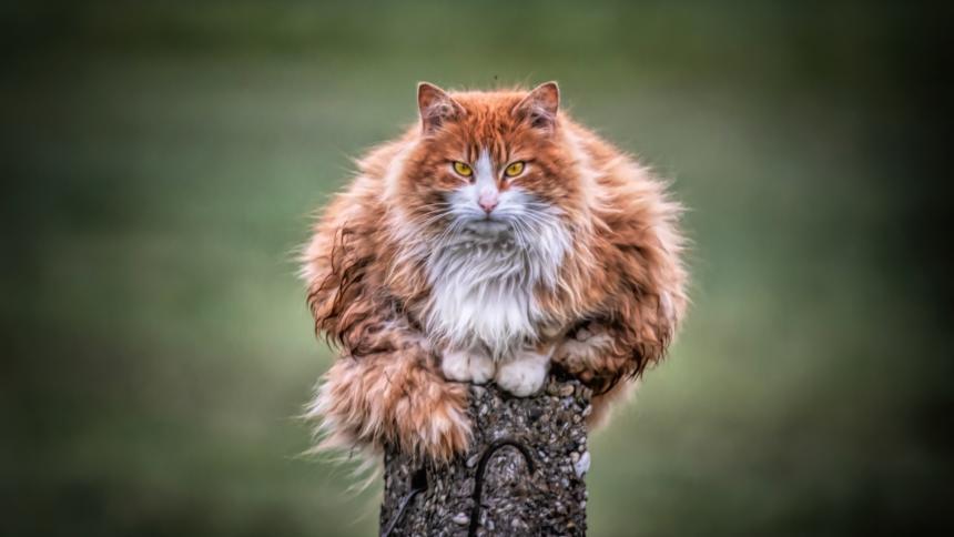 Katze, die auf einem Holzpfosten sitzt.