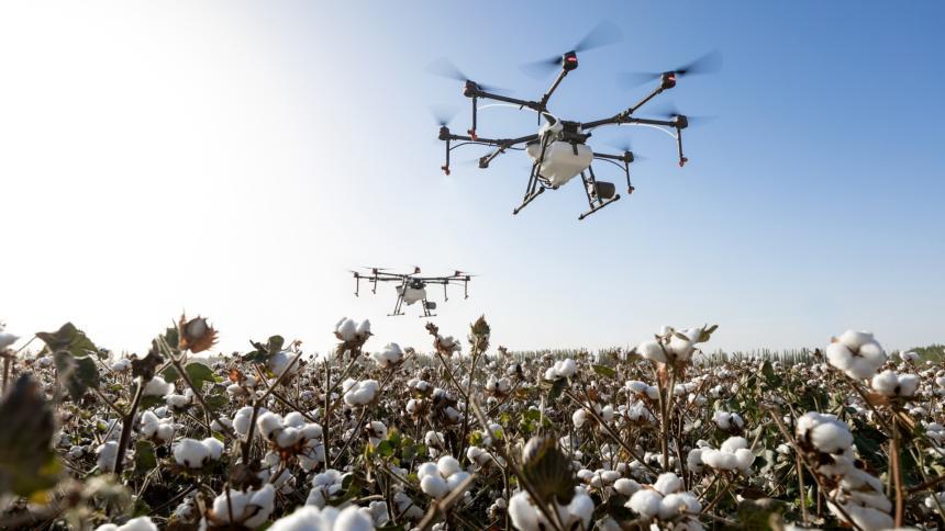 Eine Drohne fliegt über ein Baumwollfeld