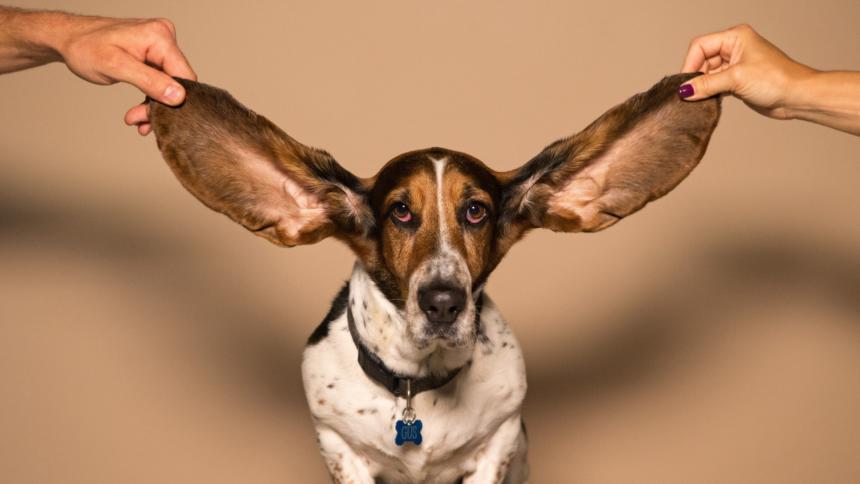 Ein Hund mit langen Ohren
