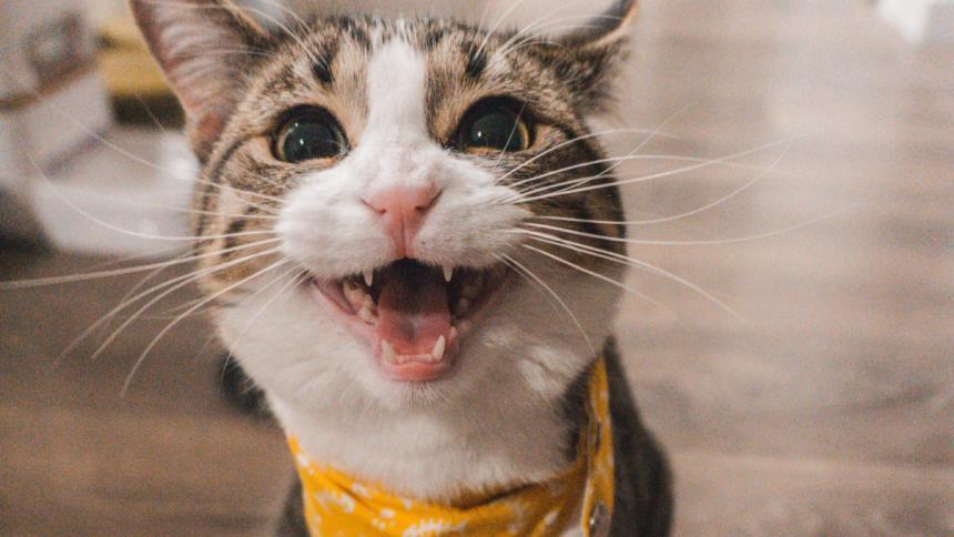 Alles für die Katz: EuGH erklärt deutsches Leistungsschutzrecht für unwirksam