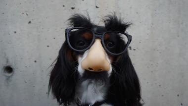 Hund mit Plastikbrille, -nase und Schnauzer.