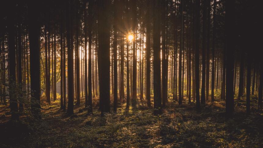 Manchmal sieht man den Wald vor lauter Blockchains nicht mehr