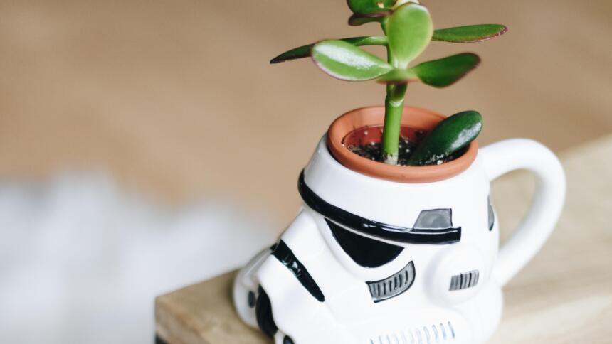 Eine Pflanze in einem Stormtrooper-Blumentopf