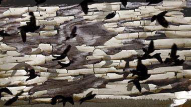 Schwarm von schwarzen Vögeln fliegt vor aufbrechendem Hintergrund