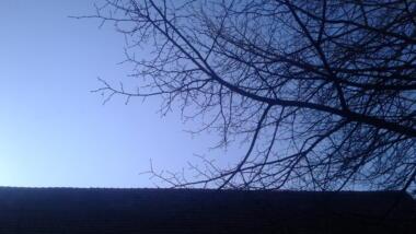 Baum vor Himmel