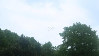 Himmel mit Bäumen und ein paar Vögeln.