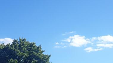 Blauer Himmel mit Wölkchen und grüner Baumkrone