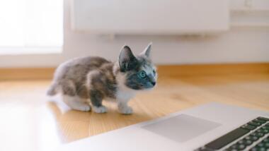 Ein Kätzchen sitzt auf dem Fußboden vor einem Laptop