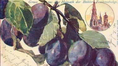 Postkarte mit Zwetschgen und Kirchturm
