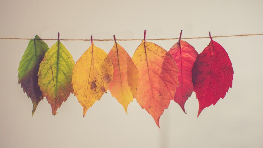 Blätter im Wandel des Jahres