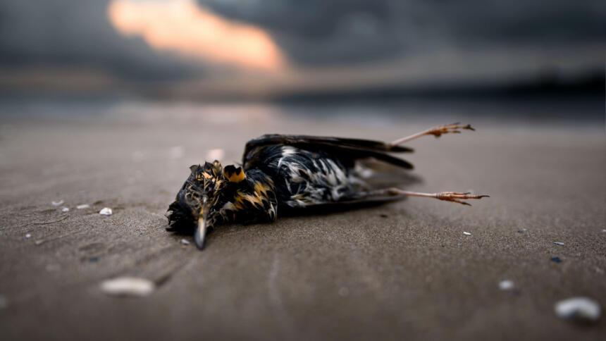 Toter Vogel liegt auf Straße