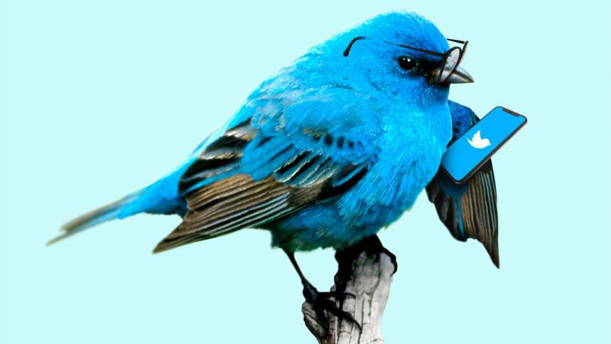 Vogel mit Handy