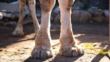 Cameltoe