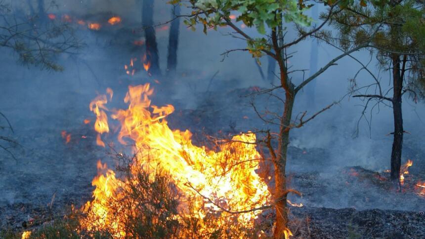 Bodenfeuer neben einer jungen Eiche in Brandenburg