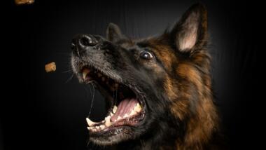 Hund schnappt nach Leckerlis