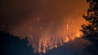 Wald steht in Flammen