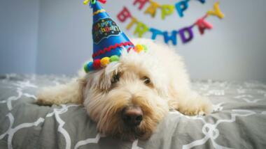 Verkleideter Hund mit Partyhut