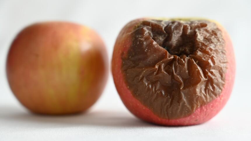 Verfaulter Apfel