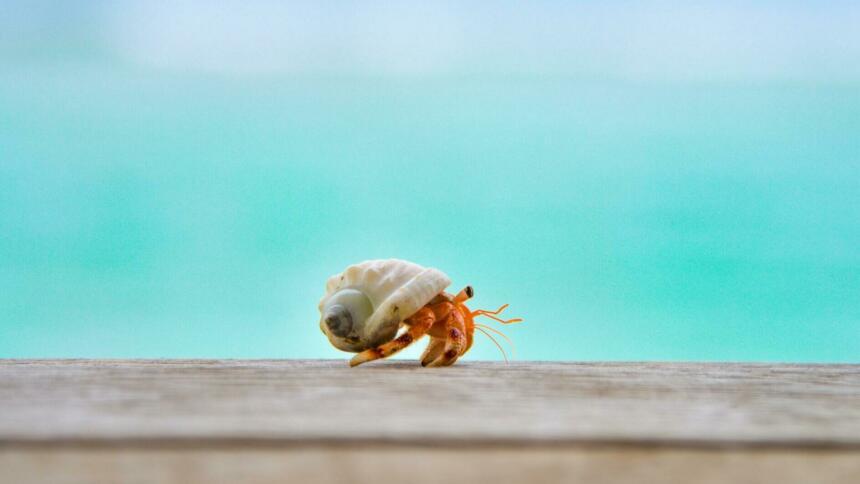 Krebs vor dem Meer