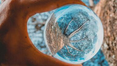 Ein Baum durch eine Glaskugel betrachtet, die in einer Hand gehalten wird.