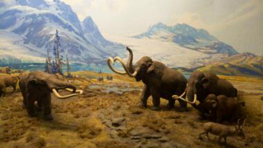 Mastodon in Drohhaltung