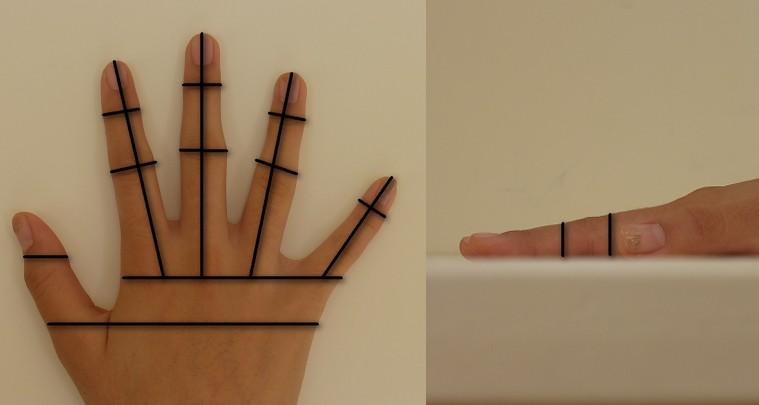 Nicht nur die Fingerabdrücke eines Menschen gelten als einmalig – die Hand- und Ohrgeometrie, die Erbsubstanz, der Gangstil, die Gesichtsgeometrie, die Handlinienstruktur die Handvenenstruktur, die Iris, der Körpergeruch, die Lippenbewegung, das Nagelbettmuster, die Retina und der Zahnabdruck sollen es auch sein. Quelle: Wikipedia (1), (2)