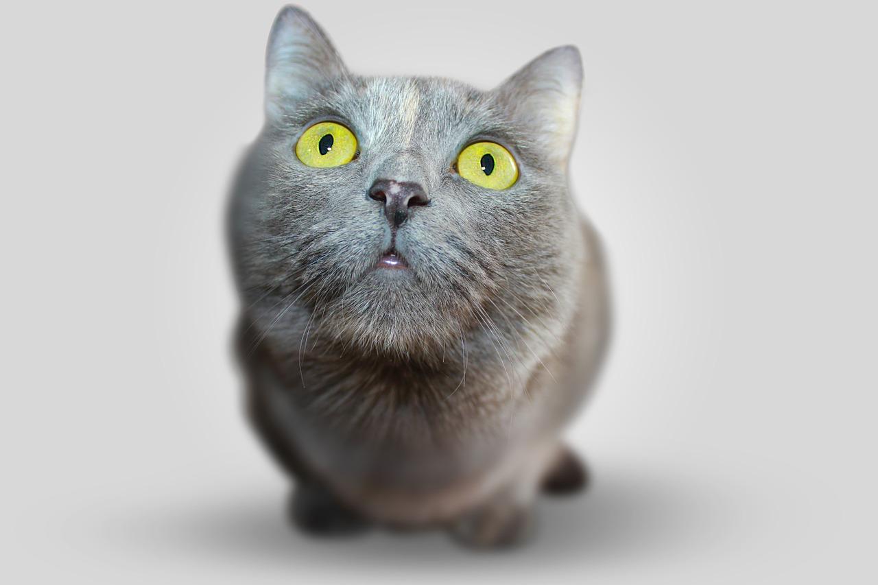 cat-351926_1280