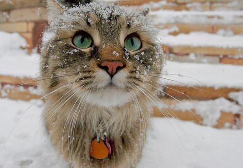 cat_snow