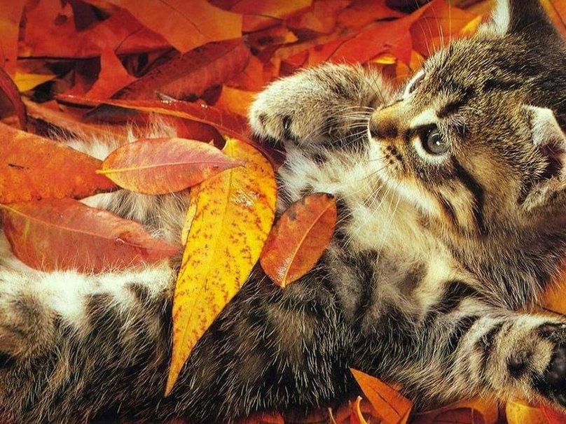 katze_oktober